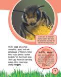 [Ebook] Bee_08