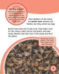 [Ebook] Bee_10