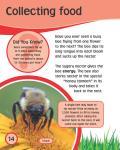 [Ebook] Bee_15