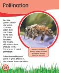[Ebook] Bee_27